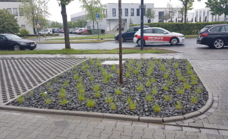 Pflanzung Baumscheibe Gewerbeobjekt