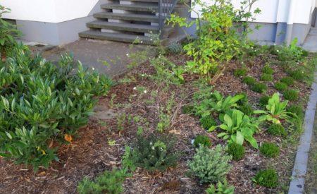 Pflanzung Vorgarten Mietobjekt